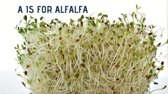 A is for Alfalfa