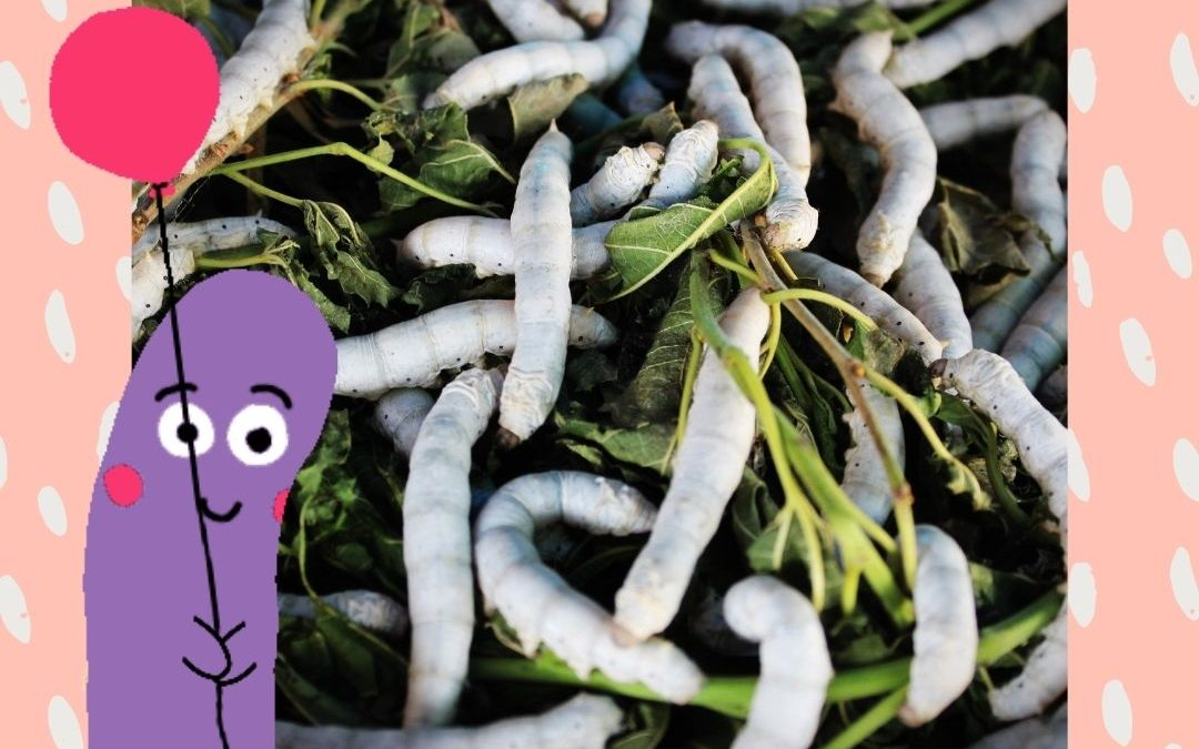Meltdowns and Mayhem: Worms, Nutrition and Herbal Medicine. Ep 4 Transcript